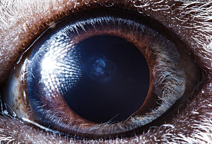 Amazing close-up photos of animal eyes (9 pics) | Amazing ...Animal Eye Close Up Picture