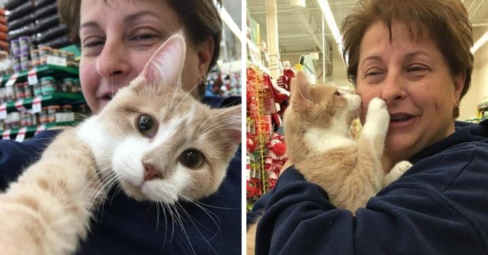 Rescue Cat Can't Stop Licking And Hugging His New Owner After Being Adopted