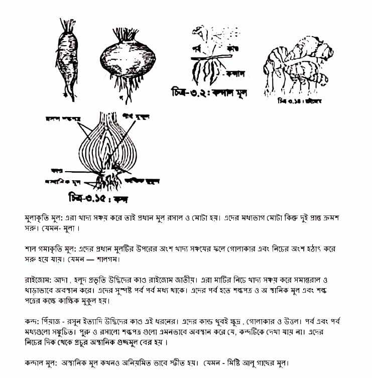 12th Week Class 7 Science Assignment 2021