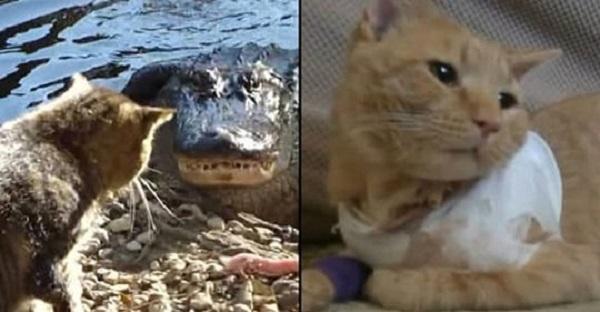 15 котов-героев, они спасли жизнь своим хозяевам!