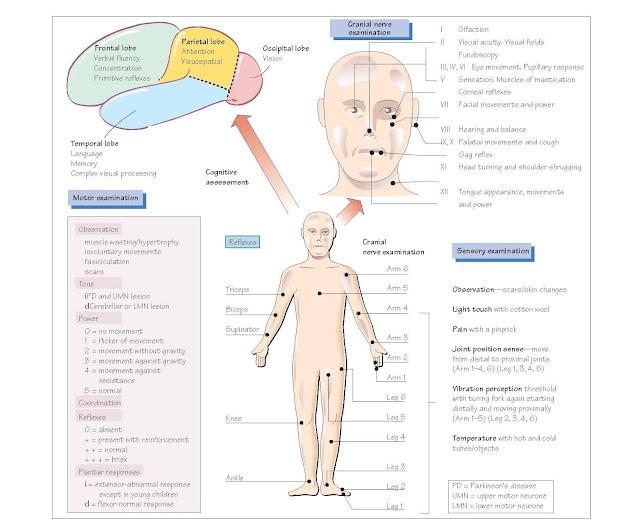 Examination Of The Nervous System, Frontal lobe function, Parietal lobe function, Temporal lobe function, Cranial nerves, Motor system examination of the limbs, Sensory examination,