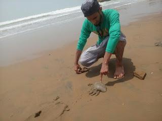 Crabs at sapat Beach makran