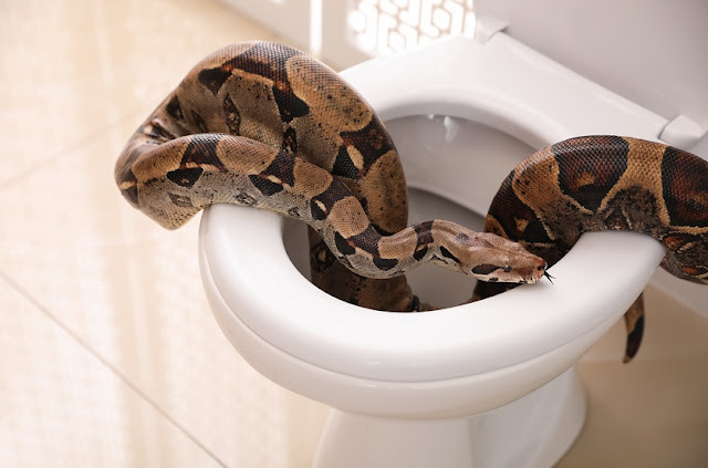 5 Easy Tips On How To Keep Snakes From Slithering Up Your Toilet