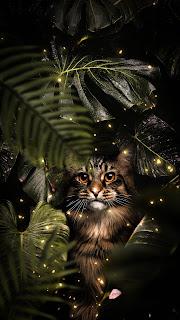 Tropical Storm Cat Mobile HD Wallpaper