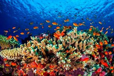 A favor de arrecifes