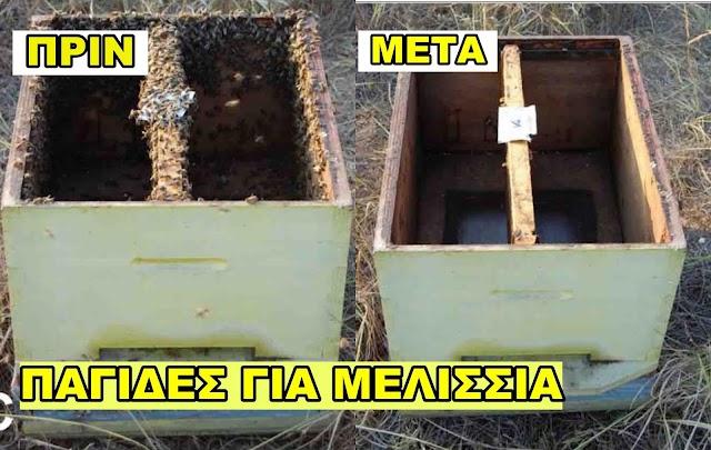 Πιάνω μελίσσια εντελώς τσάμπα: Πατέντα μελισσοκόμου για αυτοσχέδιες παγίδες