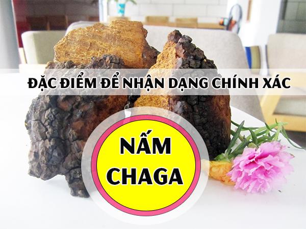 Đặc điểm để nhận dạng chính xác nấm Chaga