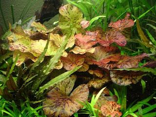 Rośliny plus ryba akwariowa
