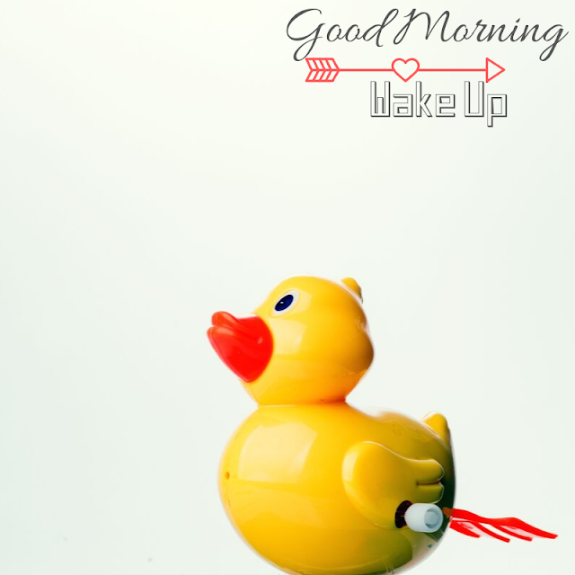 Cute Baby toy Duck Good Morning Images