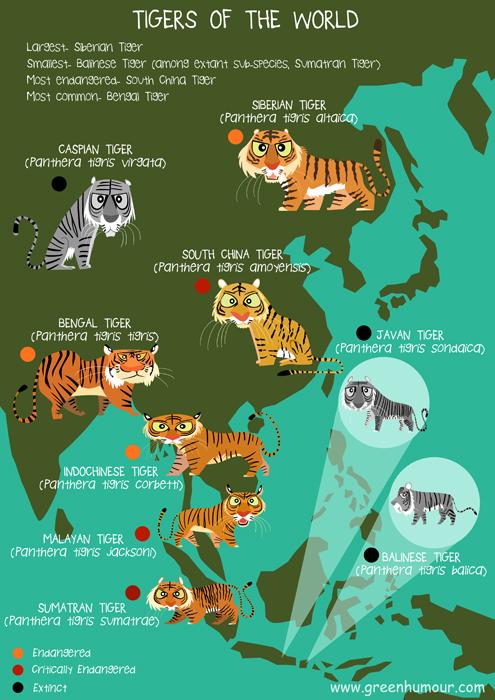 Green Humour: Tigers of the World on amur tiger map, sumatran tiger map, dhole map, african tiger map, indochinese tiger map, chinese tiger map, caspian tiger map, tiger habitat map, golden tiger map, south china tiger map, malayn tiger map, asiatic cheetah map,