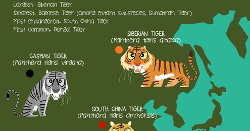 Green Humour Tigers Of The World