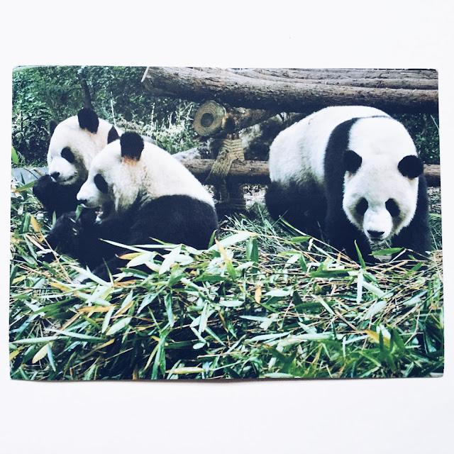 panda chiny