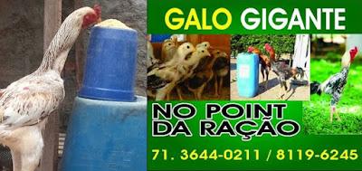 Novidadeee no POINT DA RAÇÃO Galo Gigante!! Confira.