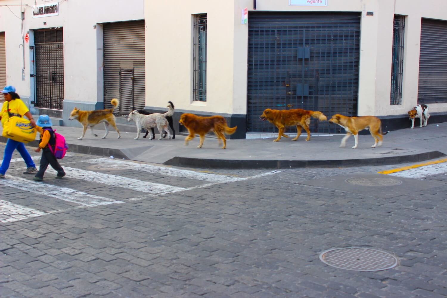 dogs in arequipa