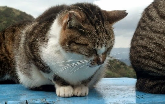 Jiufen cat