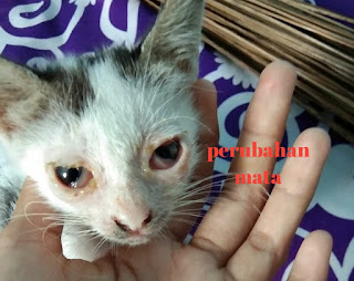 Gejala dan Ciri-ciri Kucing Cacingan Paling Akurat