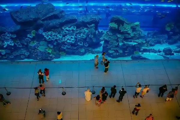 Things to Do in Busan : Busan Aquarium.