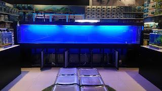 Akuarium 4 meter