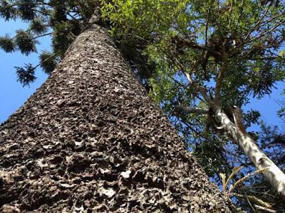 Mata do urubu, Paraná, pagamento por serviços ambientais, conservação, preservação ambiental, meio ambiente, natureza, fundação boticario
