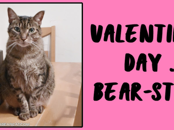 Valentine's Day ... Bear-style