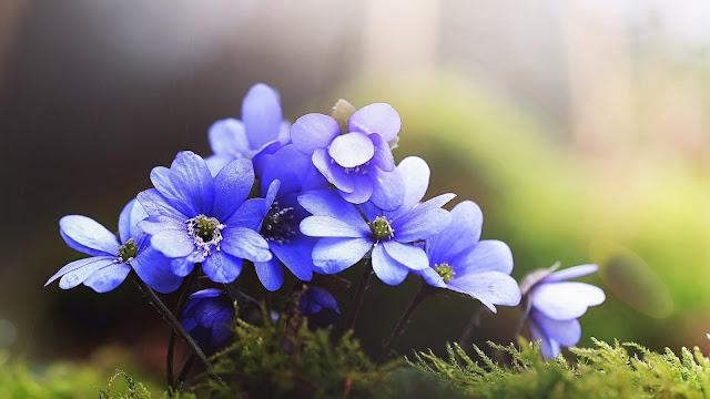 Blue flowers in blur green background HD Wallpaper