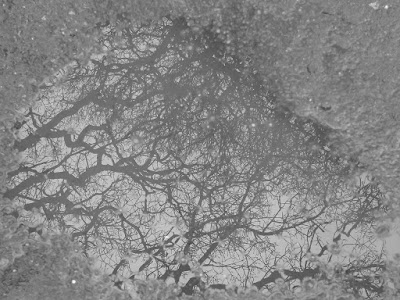 Brain-Neurons-In-a-Puddle