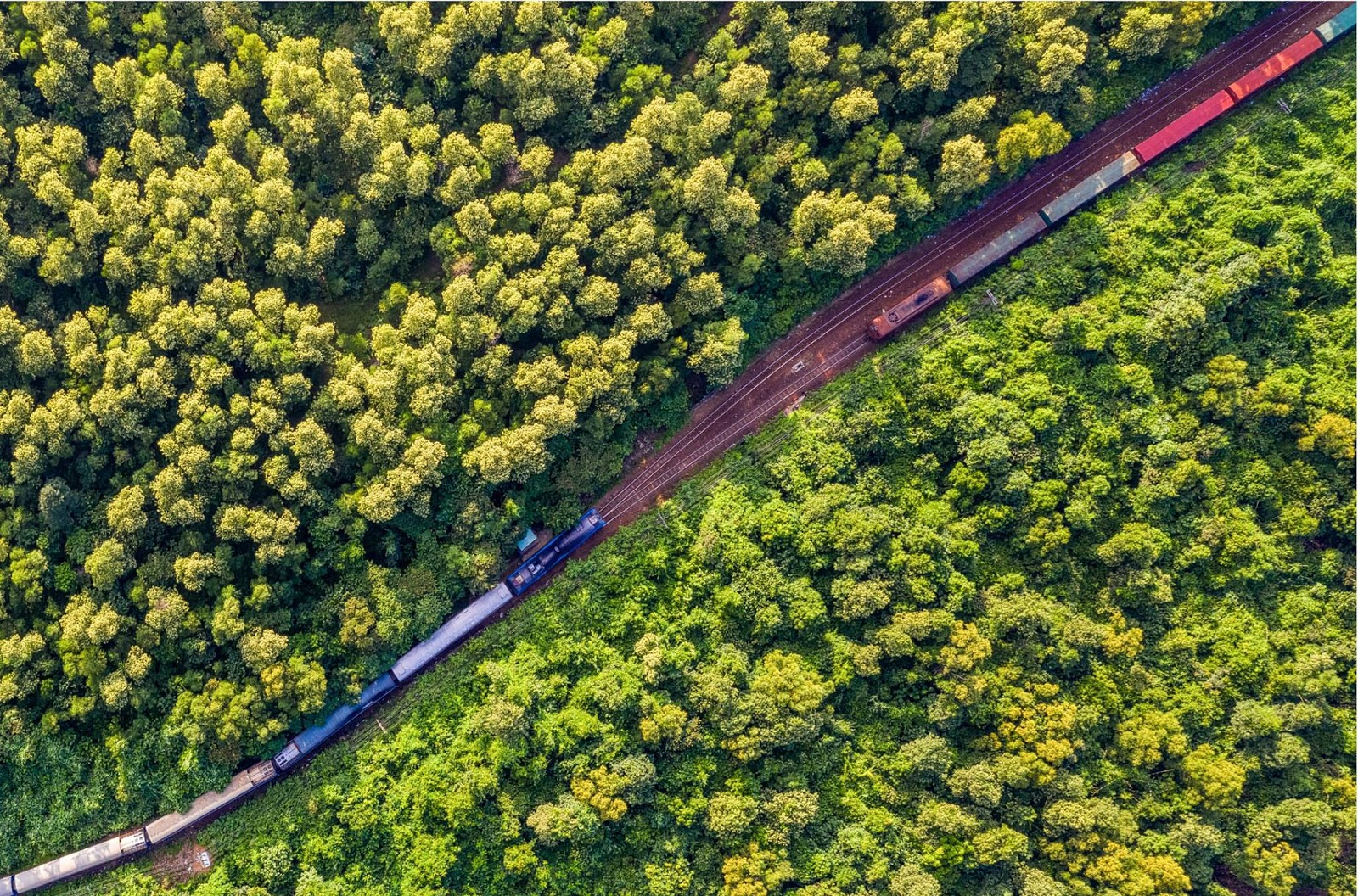 nhà ga nằm giữa rừng