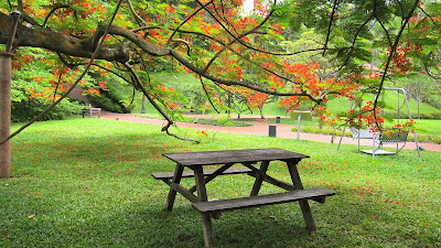 Greeneries place for picnic with wooden chairs and table under a tree