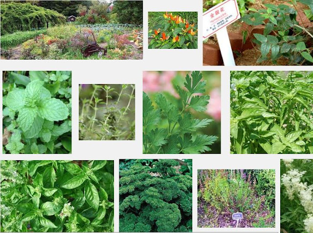 Planting Herbs in your Garden