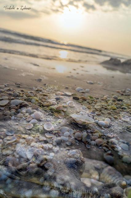Fotoprojekt 2in1 Photoday: Als Ergebnis der Doppelbelichtung liegt ein französisches Krokodil am Usedomer Strand