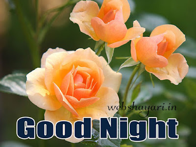 goodnight rose tasveer