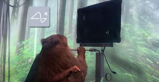 قرد يلعب لعبة البونغ بعقله عبر شريحة Neuralink