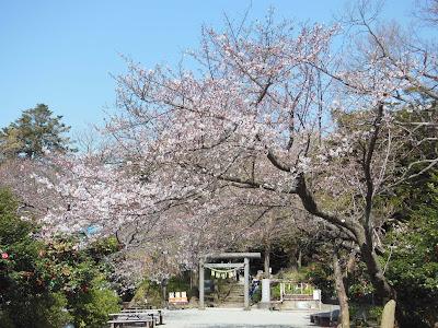 葛原岡神社前のソメイヨシノ