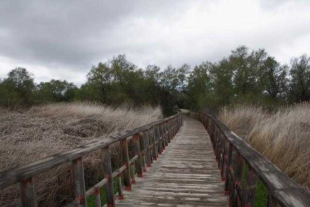 Isla del Descanso- Tablas de Daimiel