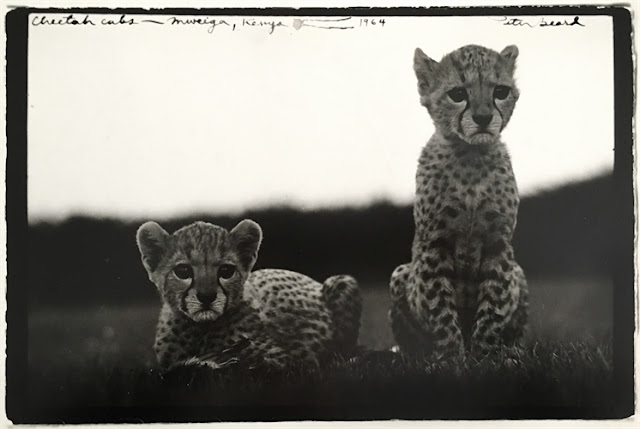 Select Photographs Auction at artnet Auctions