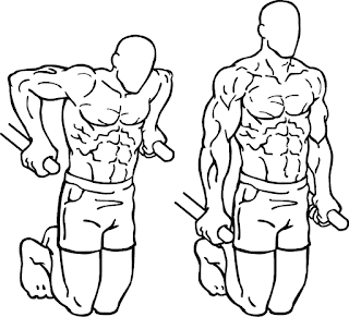 chest parallel bar dips