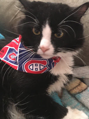 Long haired black and white cat wearing a Montréal Canadiens bandana