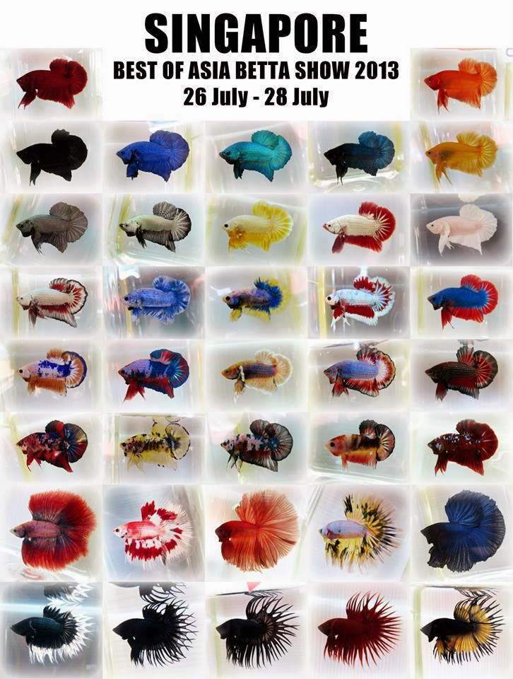 All about betta fish singapore best of asia betta show 2013 for Types of fish at walmart