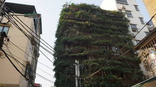 5-storey house covered with vines by the former lecturer of Hanoi University of Civil Engineering