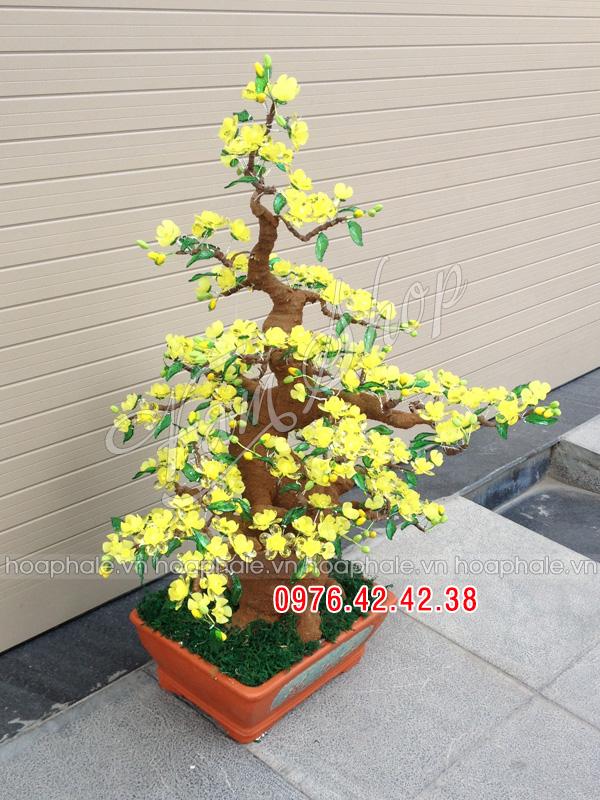 Goc bonsai mai dao cay hoa mai tai Nguyen Cao