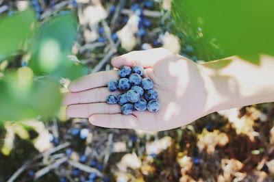 Some Picked Blueberries-- Photo by Farsai Chaikulngamdee on Unsplash