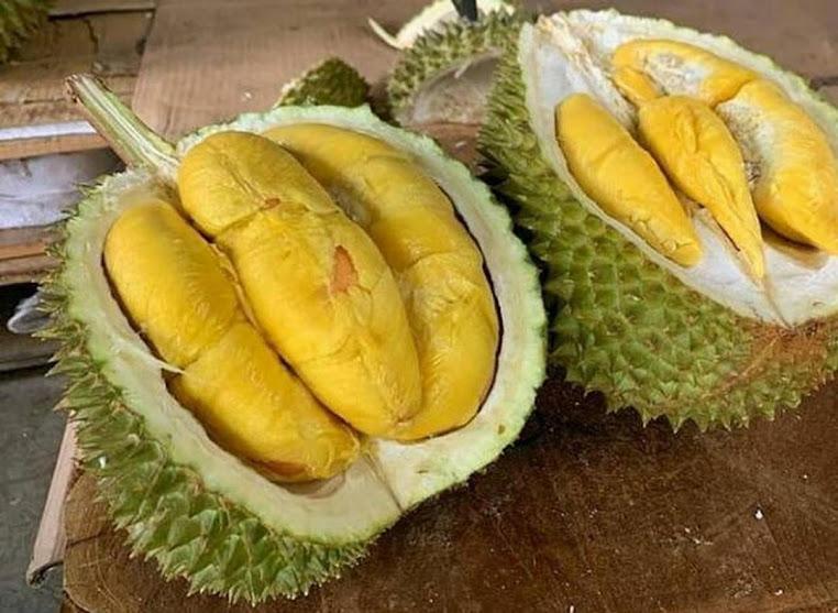 Bibit durian musang king kaki 3 tinggi 1 1 5 meter Kotamobagu