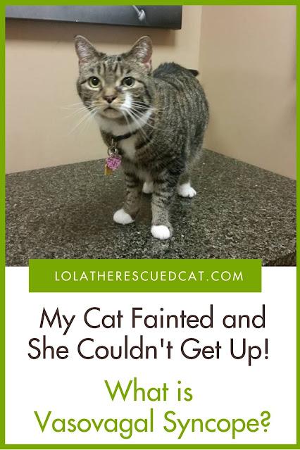 my cat fainted