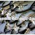 Tips memilih ikan segar di pasar.