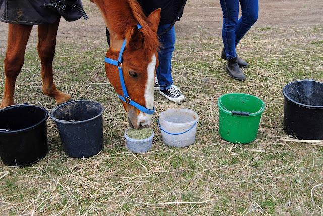 Bar ziołowy- ziółka dla koni.
