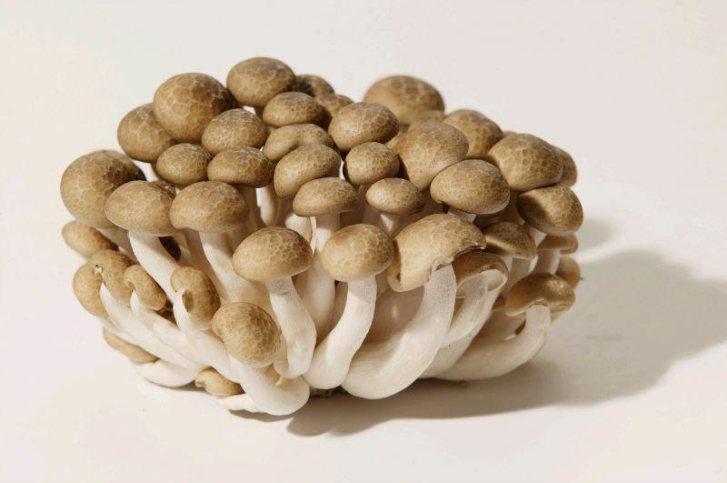 Comer Cogumelos Shimeji Durante a Gravidez é Seguro?
