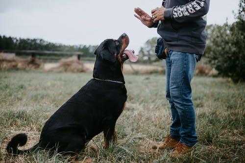 Training Your Dog Humanely: Part One