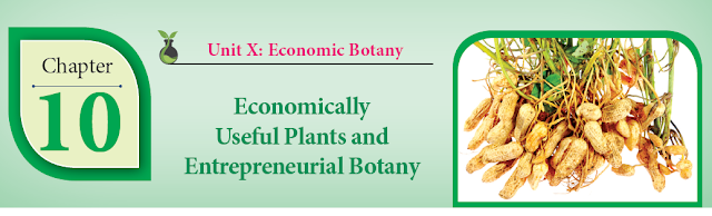 KALVISOLAI ONLINE TEST 103 - CLASS 12 BIOLOGY BOTANY - CHAPTER 10 ECONOMICALLY USEFUL PLANTS AND ENTREPRENEURIAL BOTANY - 1 MARK QUESTIONS - ONLINE TEST