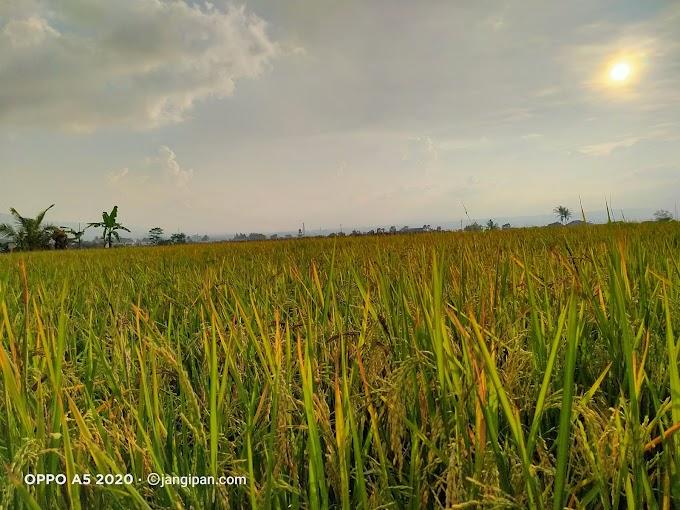 Senja di penghujung Rindu