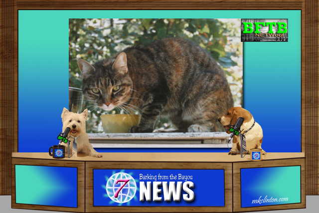 BFTB NETWoof News with tabby cat